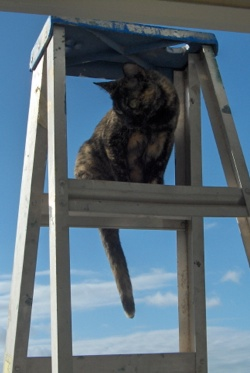 How do I get off the ladder?