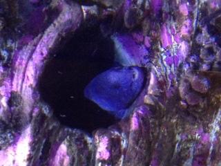 Eel at Oregon Coast Aquarium
